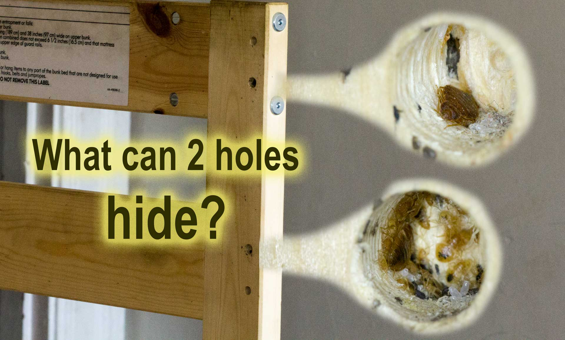 What 2 holes may hide from plain view - Bed Bug Nests!